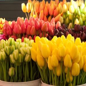 Живые цветы оптом омск цветы купить спб